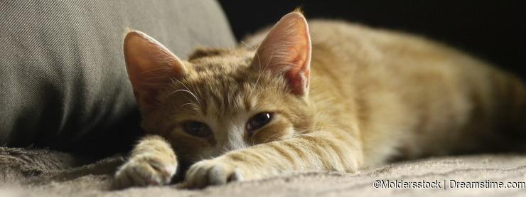 Ginger kitten lying on the couch and watch napping