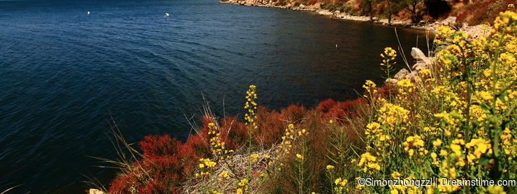 Lake with flowers and mountain