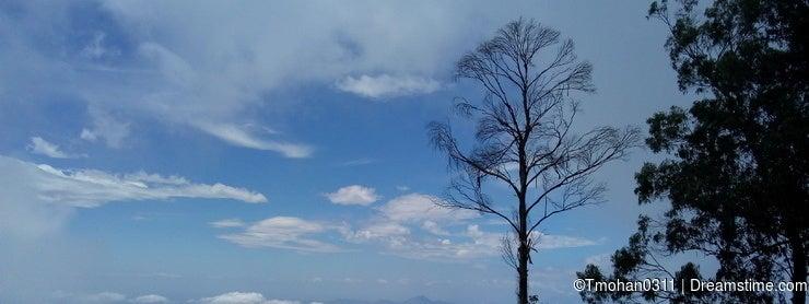 Trees atop the mountain