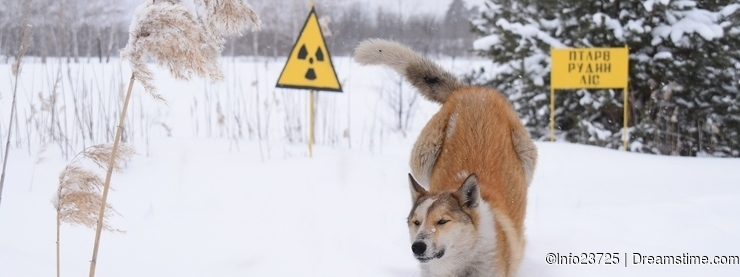 The stray dogs of chernobyl