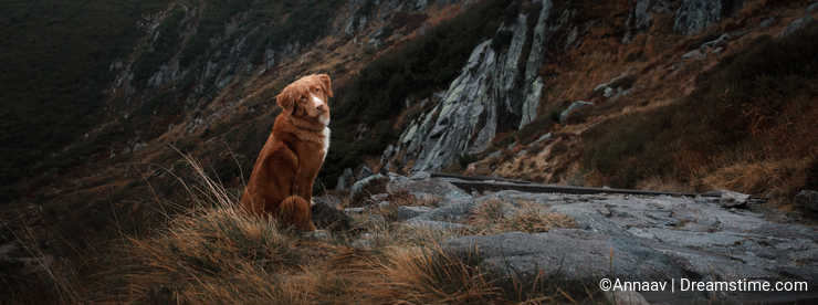 A dog in the mountains. Traveling with the pet. Healthy lifestyle.