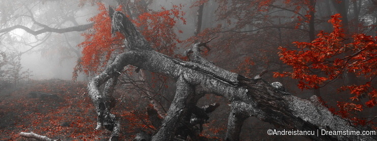 Red autumn forest with fog
