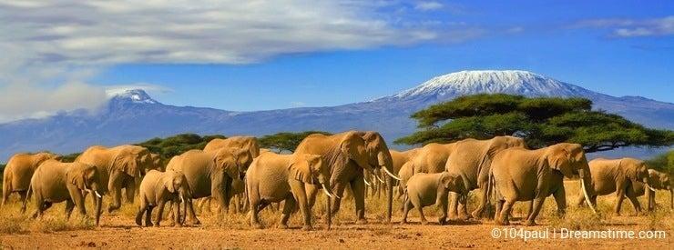 Kilimanjaro Tanzania African Elephants Safari Kenya