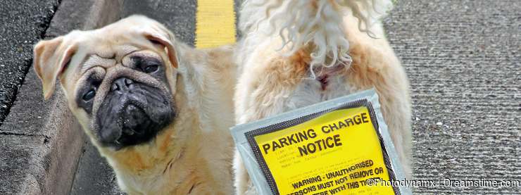 Illegally parked dog on yellow double lines parking pets
