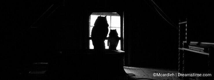 Spooky owl silhouettes in dark attic