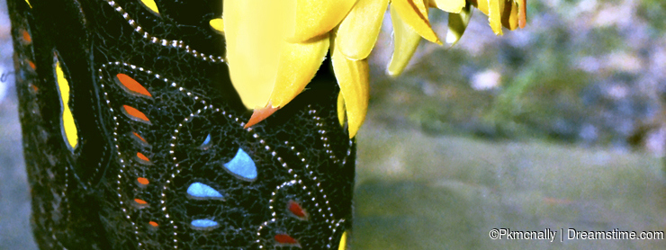 Yellow Flowers Stuffed In A Western Boot At A Rustic Themed Wedding