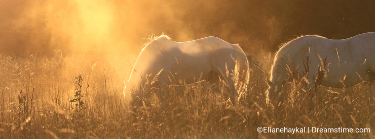 Horses in Surreal Light