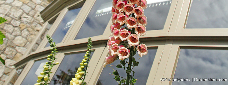 Foxglove stalk and castle towers
