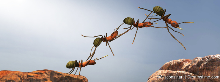 Teamwork, Teams, Team Work, Ants