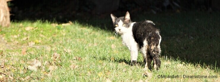 Mangy feral abandoned cat walks away