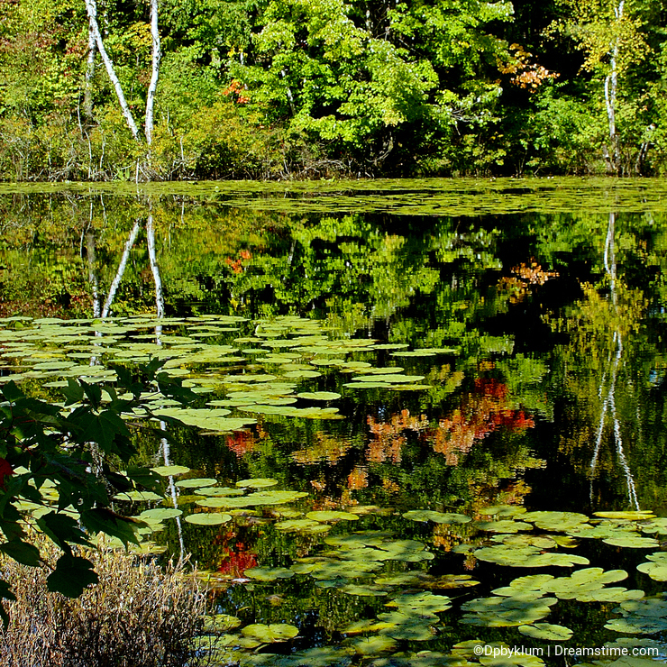 Beautiful Pond Color Reflection Shows the Artistry of Nature