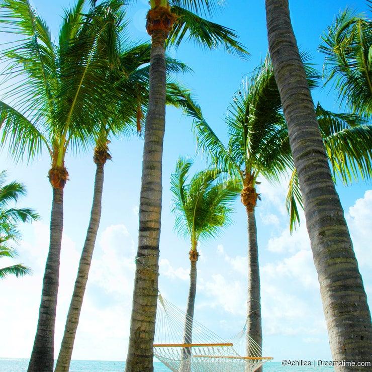 Hammock Amongst Palm Trees