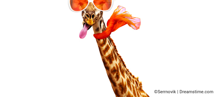 Giraffe in orange sunglasses and scarf