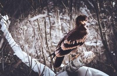 Birds of prey... something majestic