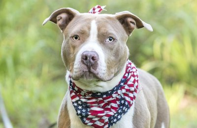 America's Dog: the shelter pet!