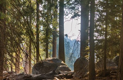 A look back: Sequoia National Park
