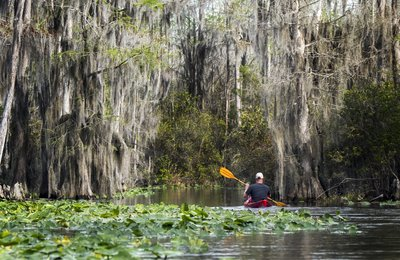 Okefenokee Swamp Photographer's Guide: Where to Paddle