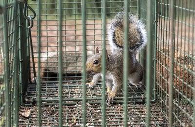 Pesky Squirrels