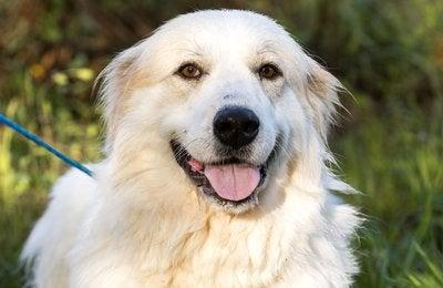 Pet Adoption Photography: Willow
