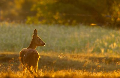 Tip of the week: Photography in the wild