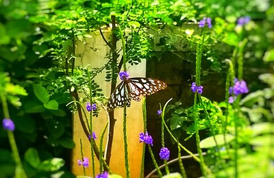 Tips for Great Butterfly Photography With Smartphone Camera
