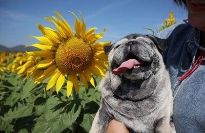 Top 10 Cutest Animal Pics on Dreamstime