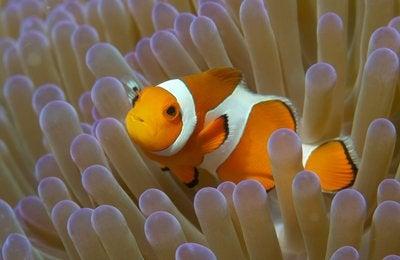 Underwater Life List (Macro) #1: Nemo