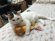Kanok Sulaiman (Konake46)