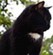 Vitalii Iudin (Catfilya)