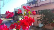 Prabhjot Singh (Feedprabhsingh84)