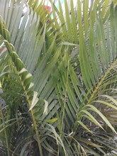 Supinder Kaur Sandhu (Supindermohala)