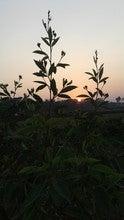 Shahadatullah Tutul (Icsshahadat1)