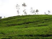Indika Puspa Kumara (Ihipuspakumara)