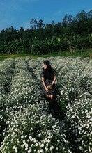 Pattasuwannakorn Loetwisetkun (Milke0987654321)