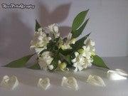 Riza Qoyyum (Riza160502)