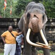 Chanishka Colombage (Chanishka)