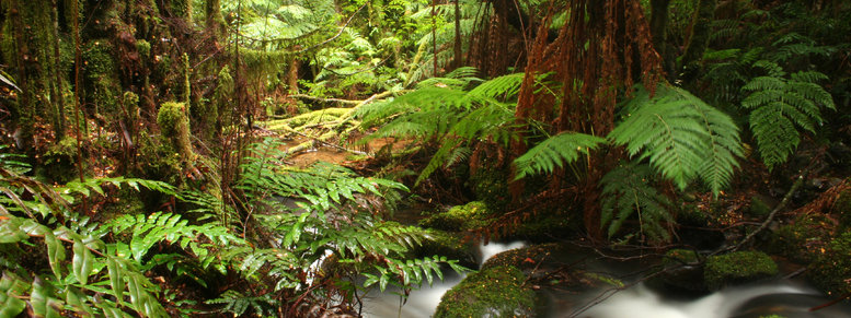 Stock photo: ancient rainforest