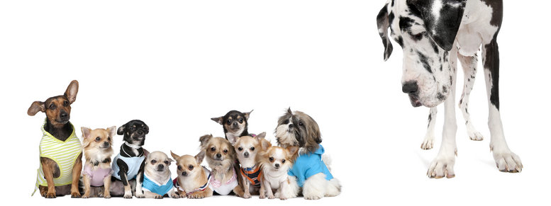 Stock photo: group of dogs against white background