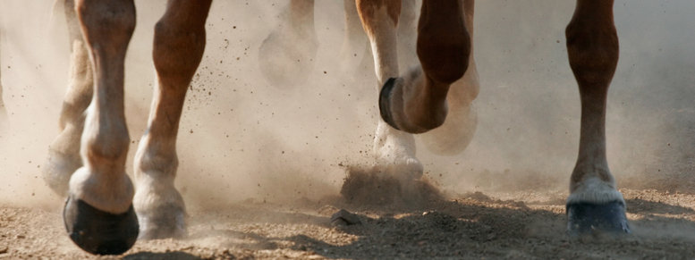 Stock photo: hoof dust