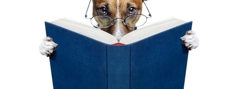 Stock photo: dog reading a book