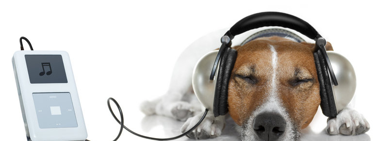 Stock photo: dog listening  to music
