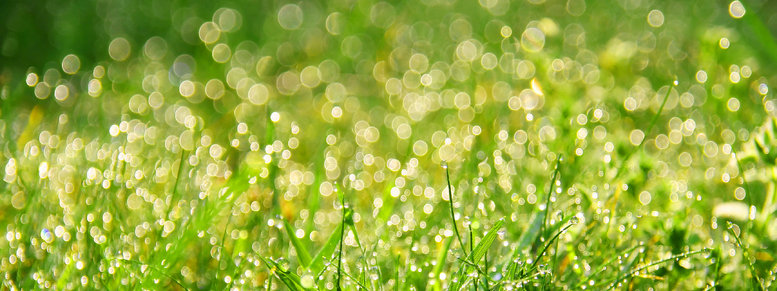 Stock photo: fresh morning dew in grass