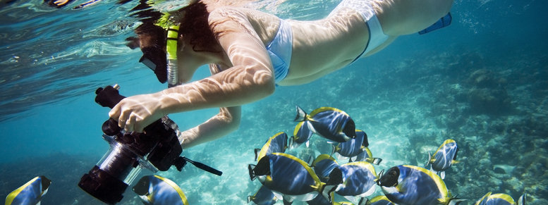 Stock photo: underwater life