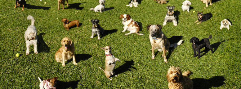 Stock photo: dogs dog park training