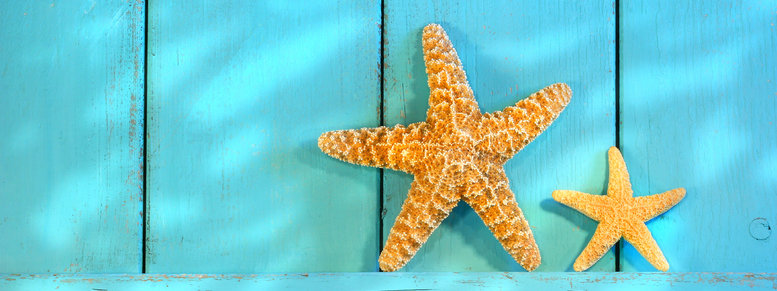 Stock photo: starfish on an old rustic door