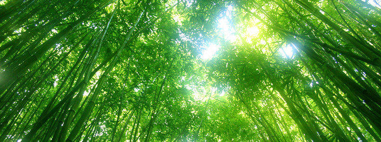 Stock photo: green bamboo tree