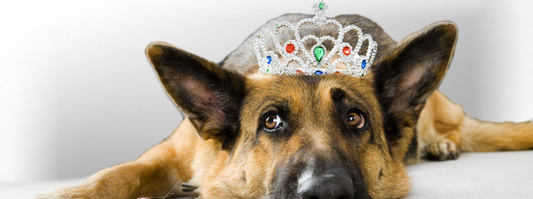 Stock photo: dog princess fairy