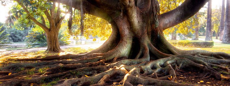 Stock photo: centenarian tree