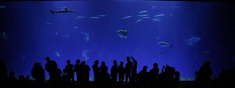 Stock photo: monterey bay aquarium