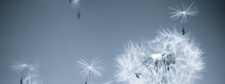 Stock photo: dandelion in the wind